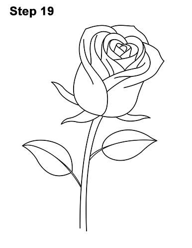 Rose Line Drawing Easy : How to draw a rose