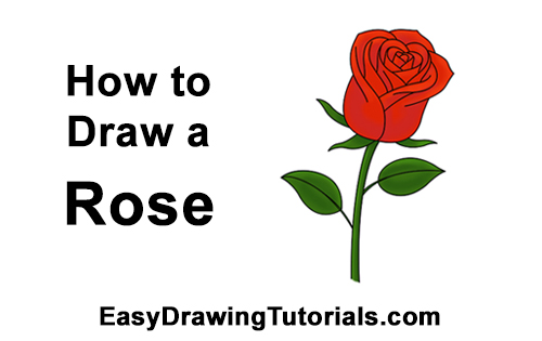 How to draw a red rose
