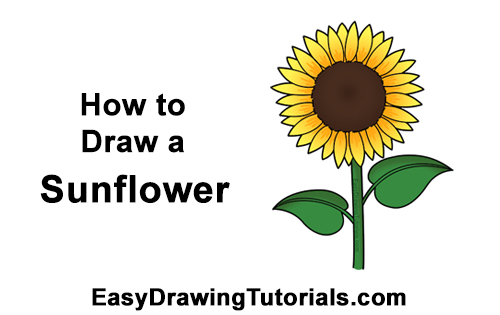 How to Draw a Sunflower VIDEO & Step-by-Step Pictures