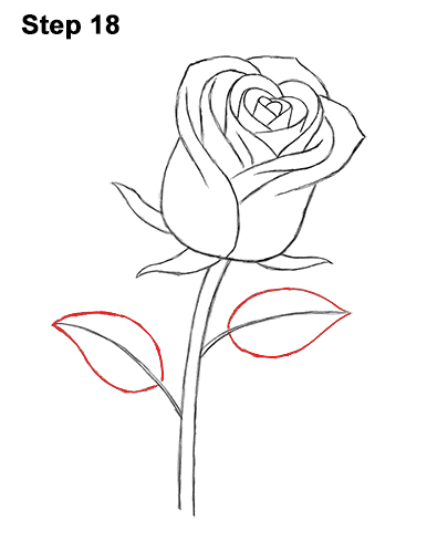 How to Draw Red Rose 18