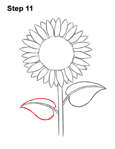 How to a Draw Cartoon Yellow Flower Sunflower 11