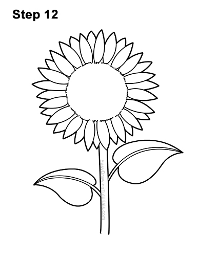 How to a Draw Cartoon Yellow Flower Sunflower 12