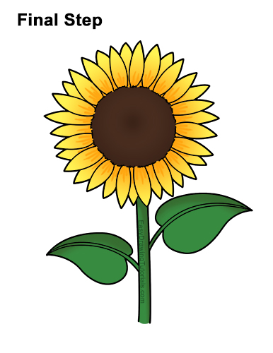 How to a Draw Cartoon Yellow Flower Sunflower